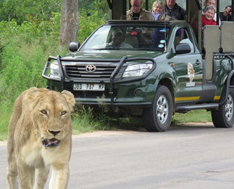 Kruger Park private safari