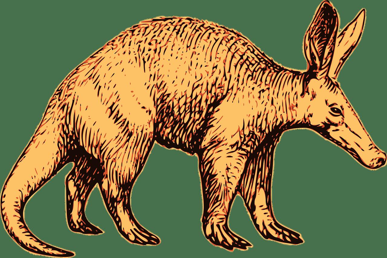 Aardvark Kruger national park safaris