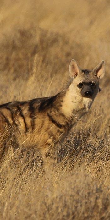 Kruger park private safaris