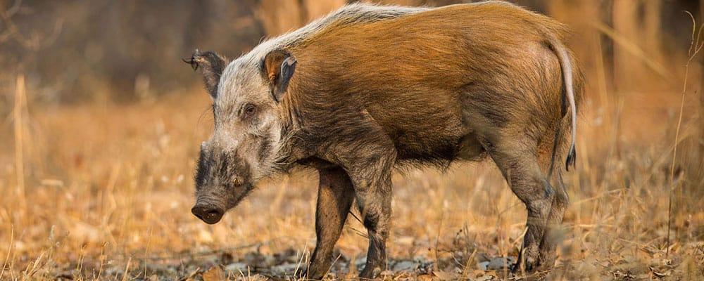 Kruger private safaris