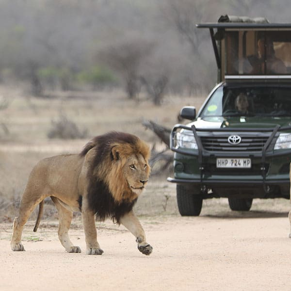 Kruger park private safaris