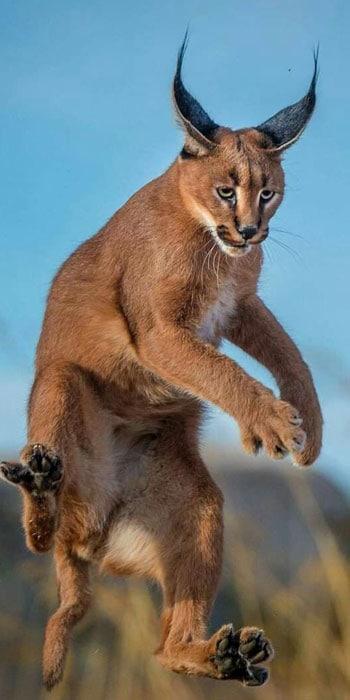 Kruger private safari