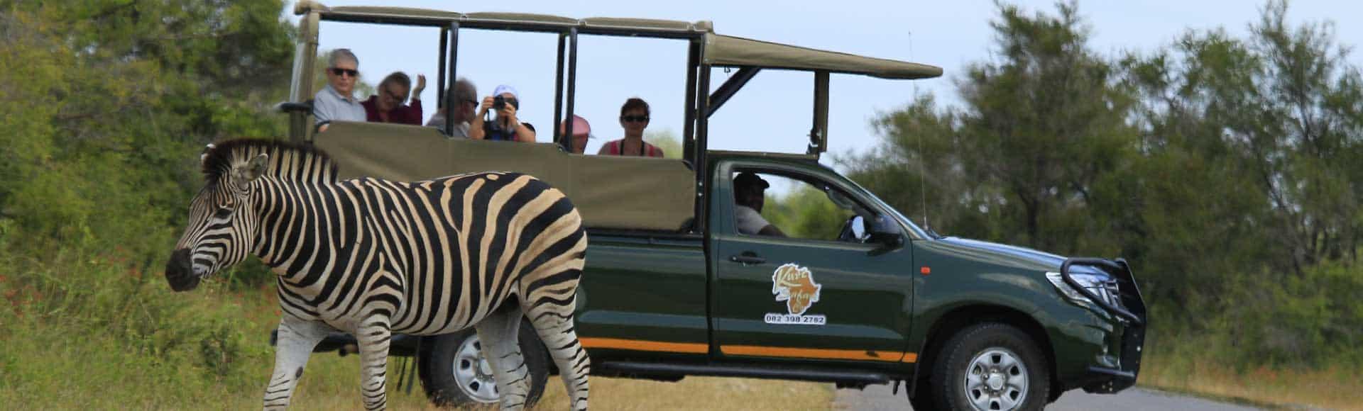 Kruger park day safaris