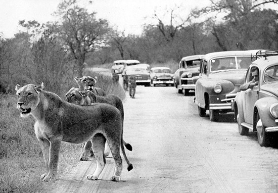 kruger_park_in_the_early_days