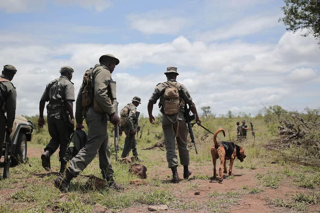 poaching squad kruger national park