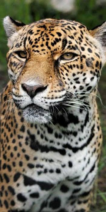 Kruger day safaris