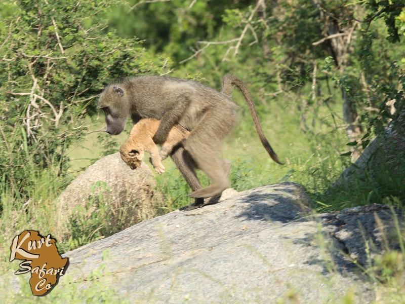 kruger national park animal sighting