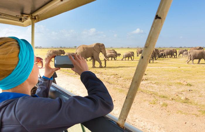 African-safari-2020