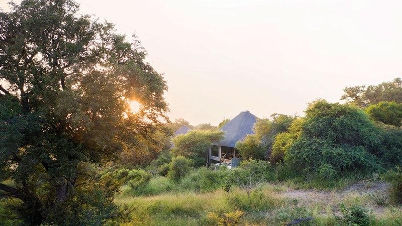 Londolozi Pioneer Camp 2